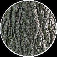 Walnut Tree - Tree Musketeers